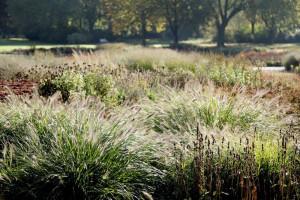 Gräser im Herbst