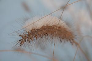 Gras im Winter mit Schnee bedeckt