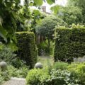 Hecke im Garten