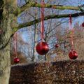 Rote Weihnachtskugeln schmücken einen winterlichen Laubbaum