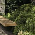 Ilex crenata als Ersatzpflanze für Buchsbaum